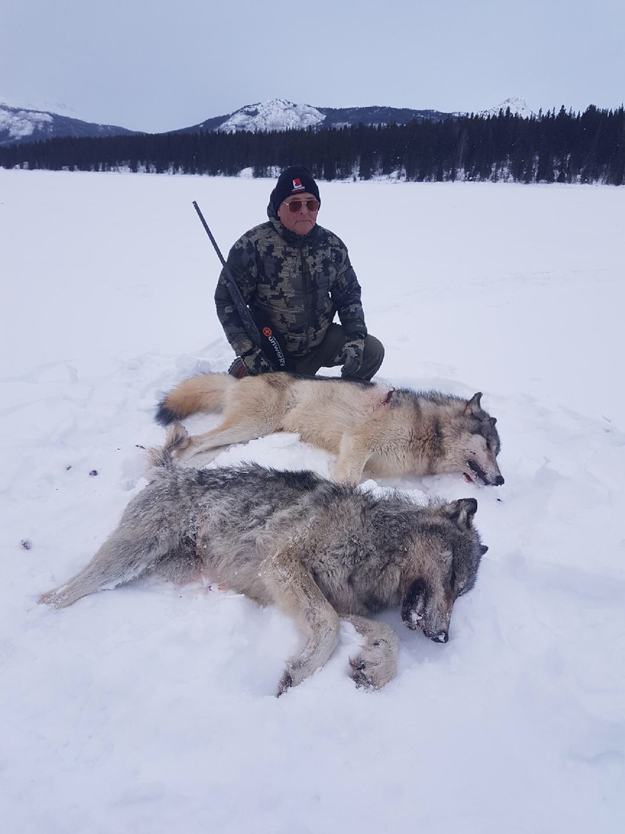 Alberta Wolf Hunting Guide & Outfitters | British Columbia ...